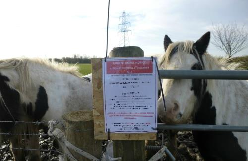 unauthorised horses grazing